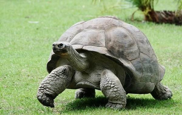 Виды-черепах-Описание-особенности-названия-и-фото-видов-черепах-10