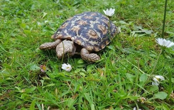 Виды-черепах-Описание-особенности-названия-и-фото-видов-черепах-11