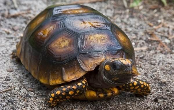 Виды-черепах-Описание-особенности-названия-и-фото-видов-черепах-12