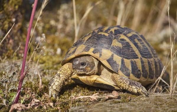Виды-черепах-Описание-особенности-названия-и-фото-видов-черепах-13