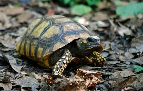 Виды-черепах-Описание-особенности-названия-и-фото-видов-черепах-15
