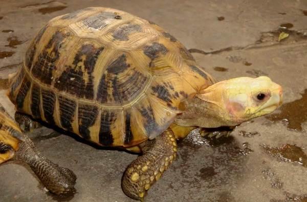 Виды-черепах-Описание-особенности-названия-и-фото-видов-черепах-16