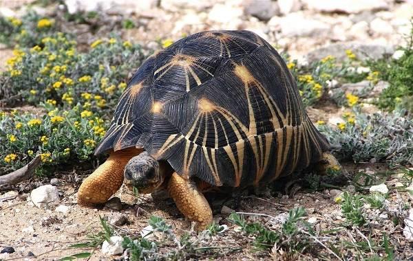Виды-черепах-Описание-особенности-названия-и-фото-видов-черепах-18