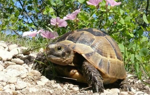 Виды-черепах-Описание-особенности-названия-и-фото-видов-черепах-20