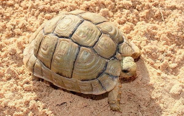 Виды-черепах-Описание-особенности-названия-и-фото-видов-черепах-21