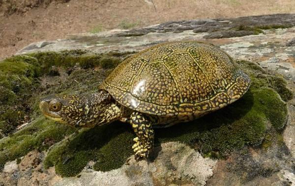 Виды-черепах-Описание-особенности-названия-и-фото-видов-черепах-22