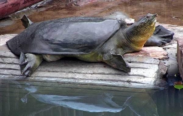 Виды-черепах-Описание-особенности-названия-и-фото-видов-черепах-24