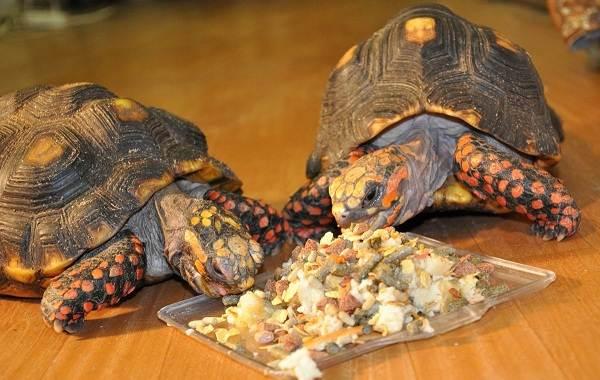 Виды-черепах-Описание-особенности-названия-и-фото-видов-черепах-27