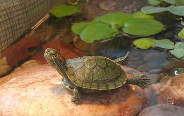 Виды-черепах-Описание-особенности-названия-и-фото-видов-черепах-28