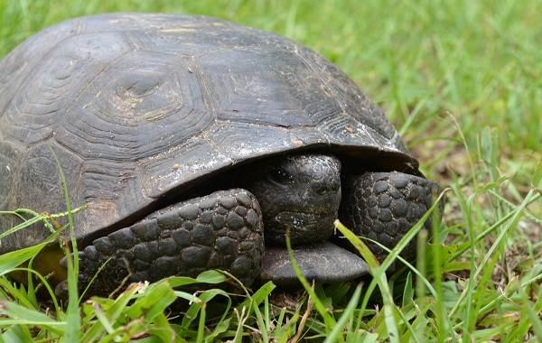 Виды-черепах-Описание-особенности-названия-и-фото-видов-черепах-3