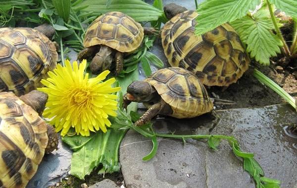 Виды-черепах-Описание-особенности-названия-и-фото-видов-черепах-30