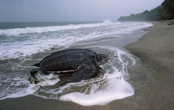 Виды-черепах-Описание-особенности-названия-и-фото-видов-черепах-5