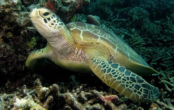 Виды-черепах-Описание-особенности-названия-и-фото-видов-черепах-6
