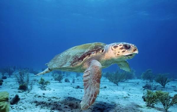 Виды-черепах-Описание-особенности-названия-и-фото-видов-черепах-7