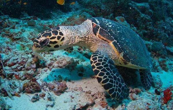 Виды-черепах-Описание-особенности-названия-и-фото-видов-черепах-8