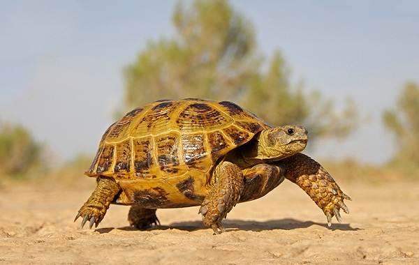 Виды-черепах-Описание-особенности-названия-и-фото-видов-черепах-9