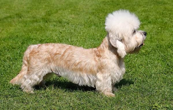 Длинные-породы-собак-Описание-особенности-виды-названия-и-фото-длинных-пород-собак-10