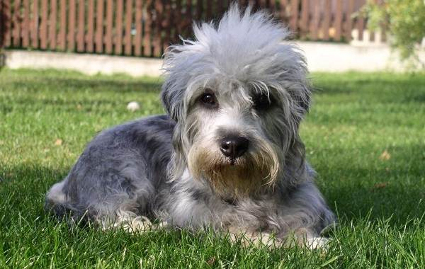 Длинные-породы-собак-Описание-особенности-виды-названия-и-фото-длинных-пород-собак-11