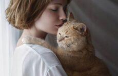Гипоаллергенные породы кошек. Описание, названия, особенности и фото кошек