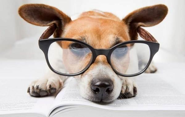 Самые-умные-породы-собак-Описание-названия-виды-и-фото-умных-пород-собак