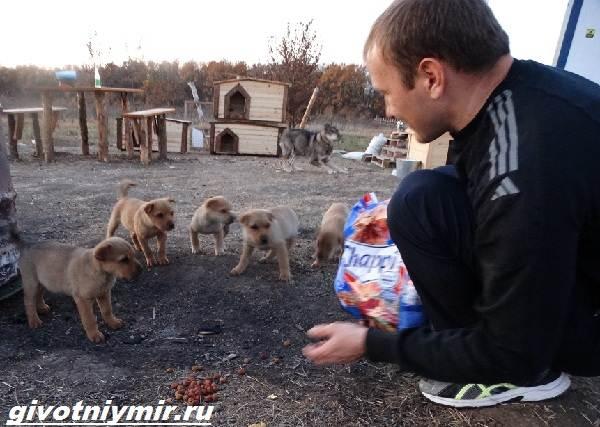 Помощь-животным-64