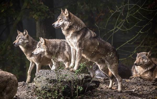 Священные-животные-Какие-виды-в-какой-стране-считаются-священными-13