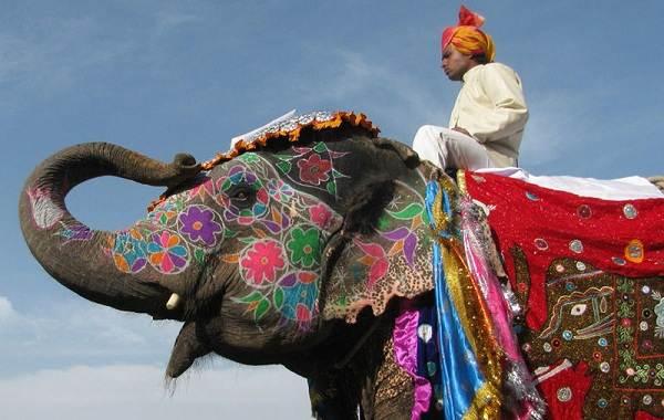 Священные-животные-Какие-виды-в-какой-стране-считаются-священными-14