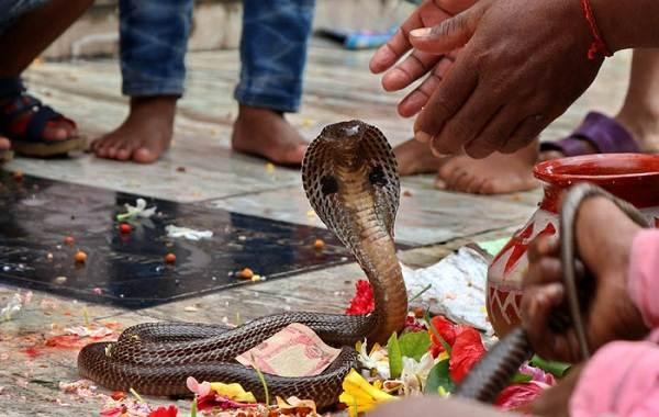 Священные-животные-Какие-виды-в-какой-стране-считаются-священными-20