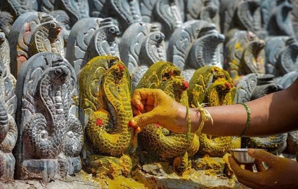 Священные-животные-Какие-виды-в-какой-стране-считаются-священными-21
