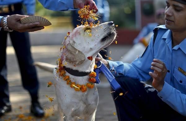 Священные-животные-Какие-виды-в-какой-стране-считаются-священными-25