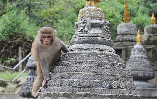 Священные-животные-Какие-виды-в-какой-стране-считаются-священными-28