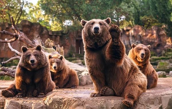 Священные-животные-Какие-виды-в-какой-стране-считаются-священными-29