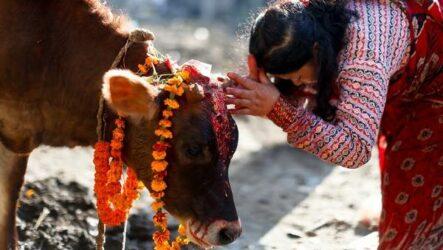 Священные животные. Какие виды в какой стране считаются священными