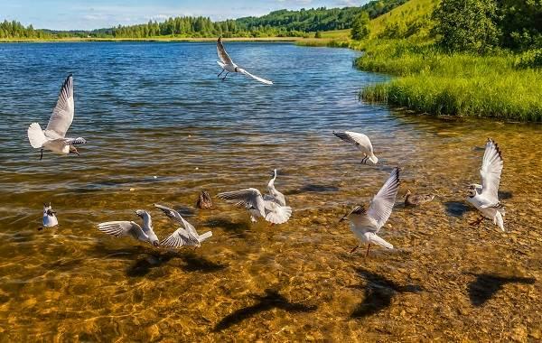 Птицы-Кубани-Описание-названия-виды-и-фото-птиц-1