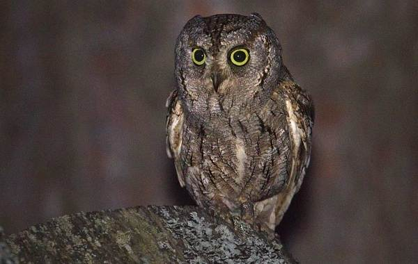 Птицы-Кубани-Описание-названия-виды-и-фото-птиц-10