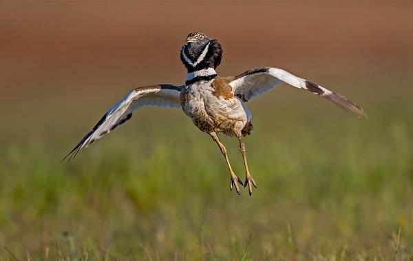 Птицы-Кубани-Описание-названия-виды-и-фото-птиц-11