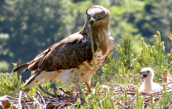 Птицы-Кубани-Описание-названия-виды-и-фото-птиц-12