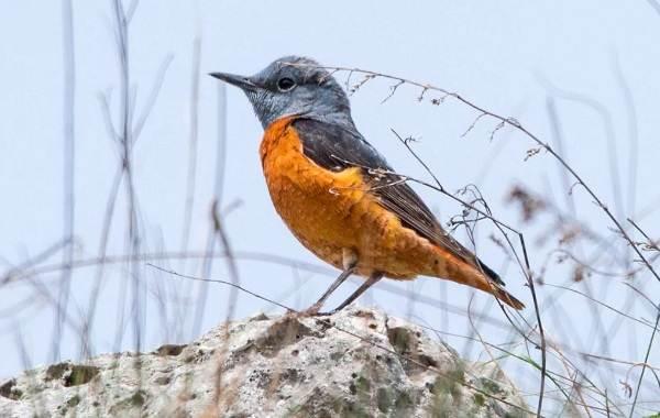 Птицы-Кубани-Описание-названия-виды-и-фото-птиц-14