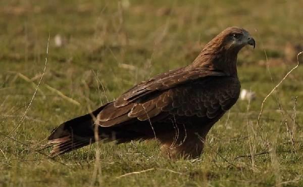 Птицы-Кубани-Описание-названия-виды-и-фото-птиц-15