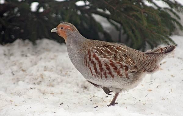 Птицы-Кубани-Описание-названия-виды-и-фото-птиц-16