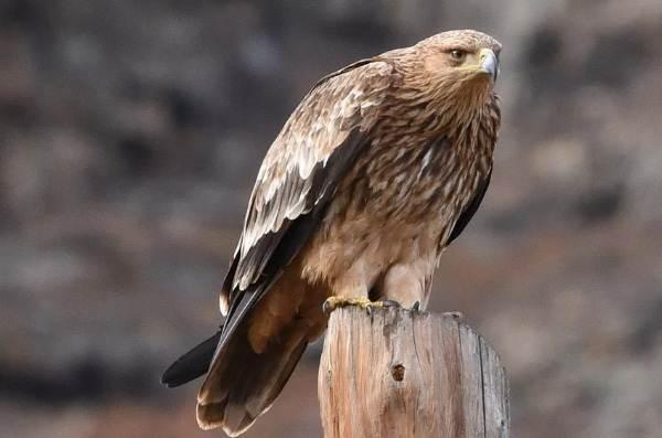 Птицы-Кубани-Описание-названия-виды-и-фото-птиц-18