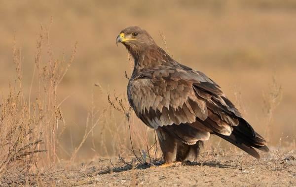 Птицы-Кубани-Описание-названия-виды-и-фото-птиц-19
