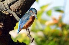 Птицы Кубани. Описание, названия, виды и фото птиц