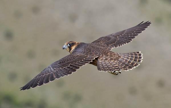 Птицы-Кубани-Описание-названия-виды-и-фото-птиц-20
