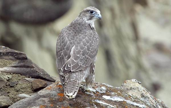 Птицы-Кубани-Описание-названия-виды-и-фото-птиц-21