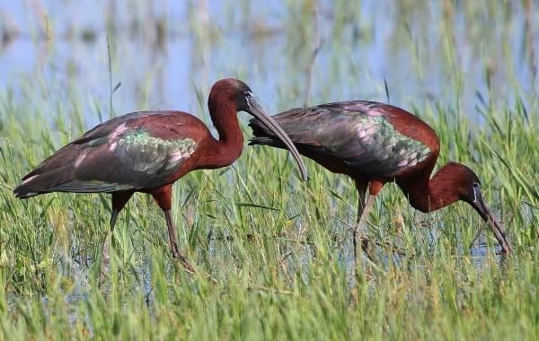 Птицы-Кубани-Описание-названия-виды-и-фото-птиц-24