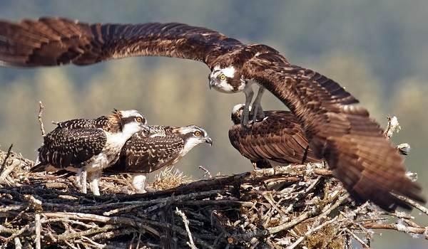 Птицы-Кубани-Описание-названия-виды-и-фото-птиц-25