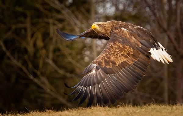 Птицы-Кубани-Описание-названия-виды-и-фото-птиц-28