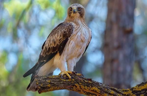 Птицы-Кубани-Описание-названия-виды-и-фото-птиц-3
