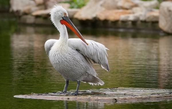 Птицы-Кубани-Описание-названия-виды-и-фото-птиц-32